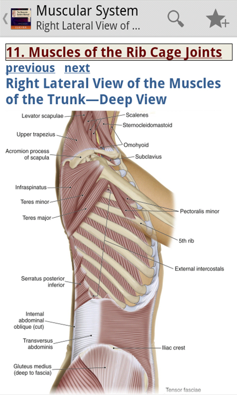 Zoom IMG-3 the muscular system manual skeletal