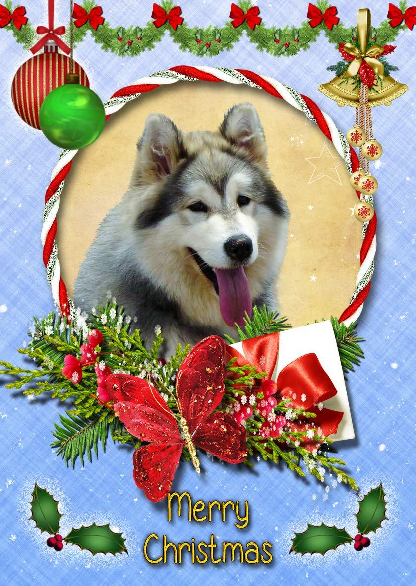 Alaskan Malamute Christmas Card Blue 'Merry Christmas'