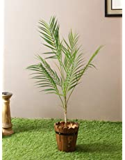 Fourwalls Artificial Areca Plants with 21 Leaves & Without Pot (75 cm Total Height, Green)