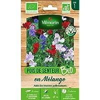 Vilmorin - Sachet graines Pois de senteur en mélange BIO - Lathyrus odoratus