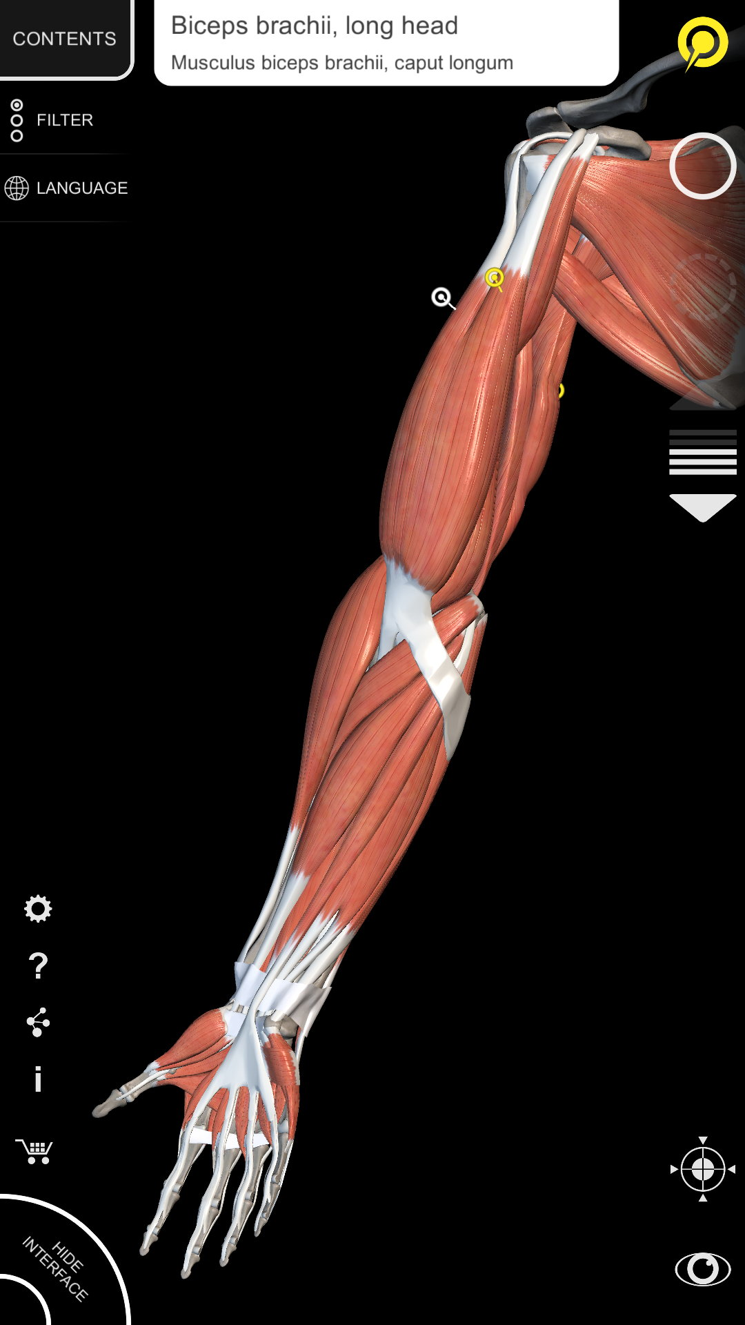 Muscular System 3d Atlas Of Anatomy Amazon Appstore For