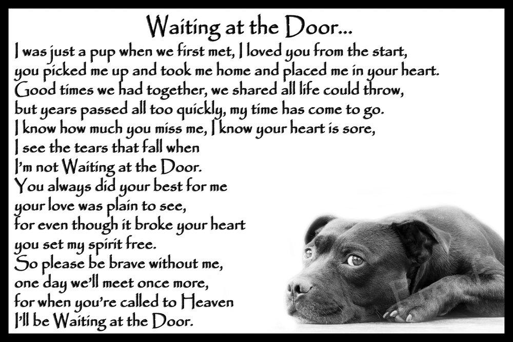 Staffordshire Bull Terrier Staffy bereavement pet dog loss sympathy Memorial – Waiting at the Door