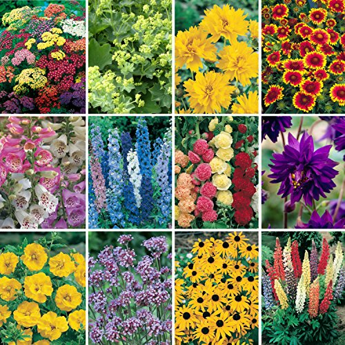 cottage garden plants amazon co uk
