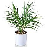 Kazeila Mini Fausses Plantes en Pot Paume d'arec Artificielle de 40 cm pour Bureau à Domicile hôtel librairie café décoration