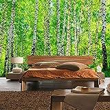 Fototapete 350x245 cm - ALLE TOPSELLER auf einen Blick ! Vlies PREMIUM PLUS - BIRCH FOREST - Birkenwald Bäume Wald Sonne Birkenhain Birke Birken Gras Natur Baum - no. 008