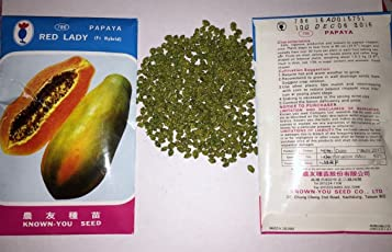 Green World-201 Red Lady Papaya Seeds(Taiwan Imported)10 Grams Pack