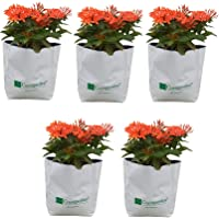 Cocogarden Large Size Poly GROWBAGS - UV STABILIZED [28cms(L) x28cms(W) x48cms(H)]