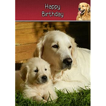 Golden Retriever Birthday Card 8 X5 5 Mix Match On 8 X5 5 Cards