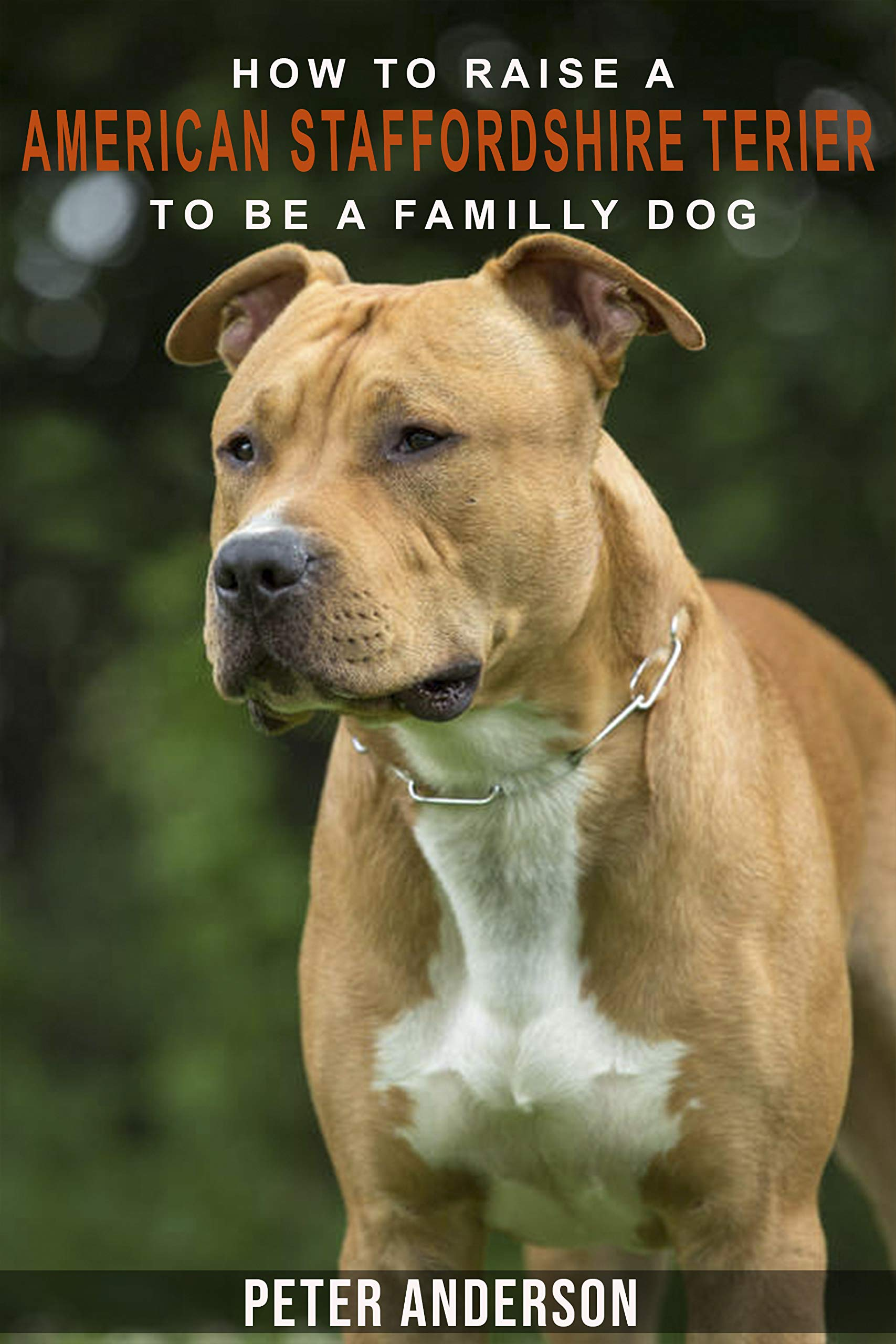 How to rasie a american staffordshire terier to be family dog:  American Staffordshire Terrier Socializing, Obedience Training,, Housetraining, Behavioral Training and much More