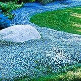 Adolenb Seeds House- 100pcs Blue Foot Grass Seeds - Graines vivaces Blue Eyed Grass Jardinage Jardin En Plein Air Bleu Fleurs Sauvages Graines Accueil Pelouse Décoration