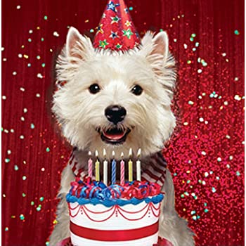 Westie Birthday Card Birthday Westie Amazon Kitchen Home