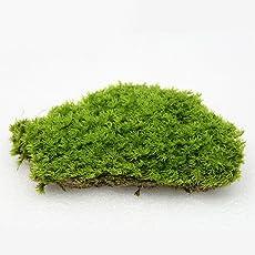 Ocamo Air-Drying Moss Miniature Garden Ornament DIY Craft Dollhouse Flowerpot Decoration Green