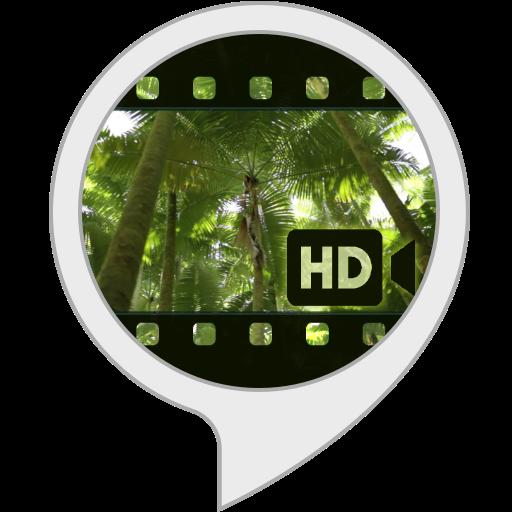 Ambient Visuals: Tropenwald