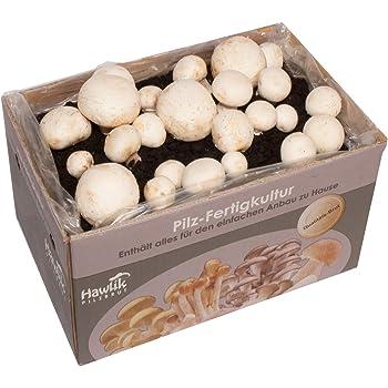Hawlik Pilzbrut - das Orginal - weiße Champignon - ca. 7kg - GROßE Kultur zum selber züchten - kinderleicht frische Pilze ernten