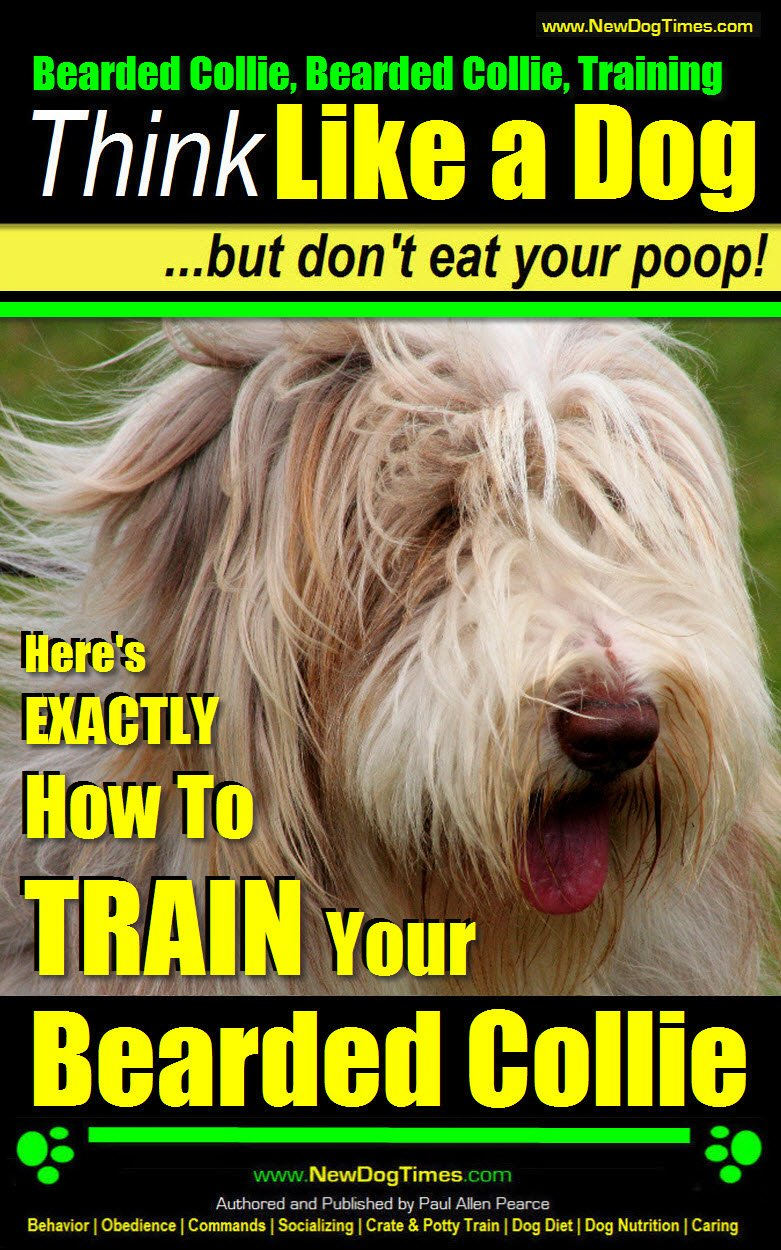 Bearded Collie, Bearded Collie Training | Think Like a Dog, But Don't Eat Your Poop! |: Here's EXACTLY How To Train Your…