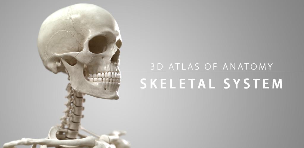 Skelettsystem - 3D Anatomie: Amazon.de: Apps für Android