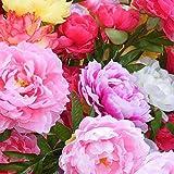 TOYHEART 100 Piezas De Semillas De Flores De Primera Calidad, Semillas De Peonía, Plantas Florecientes De Suffruticosa, Plánt