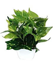 Pindia Plastic Miniature Money Plant Leaf Artificial Indoor/Outdoor Plant Decorative Plant with Pot (18 cm x 10 cm x 23 cm, Green)