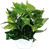 Pindia Miniature Money Plant Green Leaf Artificial Indoor/Outdoor Plant Decorative Plant for Home Office Garden Décor…