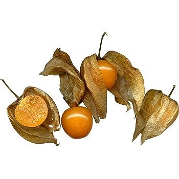 Physalis pruinosa Ananaskirsche 10 Samen Goldmurmel