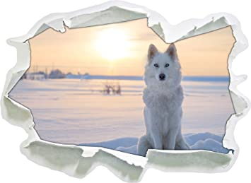 White Wolf In The Snow Paper 3D Wall Stickers, Wall Decoration, 3D Wall  Stickers Part 36