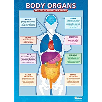 Body Organs Science Educational Wall Chartposter In High Gloss