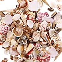 Oshi Greens Mix Size 500 gm Pack for Aquariums/Art and Crafts/Table Decoration (Multicolored, Mix, Sea Shell) (Multi 2)