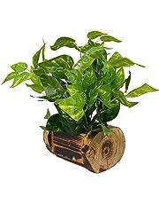 Fancy Mart Fabric, Wood & Plastic Artificial Money Plant in Wood Buckle Pot (35 cm, Green)
