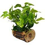 Fancy Mart Fabric, Wood & Plastic Artificial Money Plant in Wood Buckle Pot (35 cm, Green)