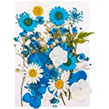 Heyu-Lotus Fleurs Séchées Naturelles Pressées Mélange Fleurs Séchées pour Bricolage Bougie Résine Nail Art Décoration Artisan
