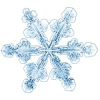 Frost Alert