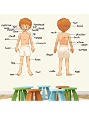StickMe PVC Vinyl Parts of Body Wall Sticker Learning Education Nursery School Kinder Garden for Baby (120 X 90 cm)