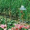 Tomatenhauben, 3 Stück von Gärtner Pötschke auf Du und dein Garten