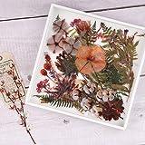 Lot d'autocollants Fleurs Séchées et Plantes, NogaMoga 80 pièces Pommes de Pin Fougère Coton Décoratifs Autocollants Vinyle é