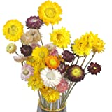 HUAESIN 2pcs Ramo de Flores Secas Naturales Decoracion Jarrones 43cm Flor Margaritas Secas Naturales Manzanilla Amarallas Bla