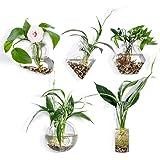KNIKGLASS - Macetas de Cristal para Colgar en la Pared, diseño geométrico, macetas, macetas de Aire, florero, Plantas de Aire