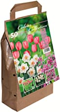 Greenbrokers Ltd Colour Harmony Blumenzwiebeln, Mix mit 25 Frühlingsblumen, rosa