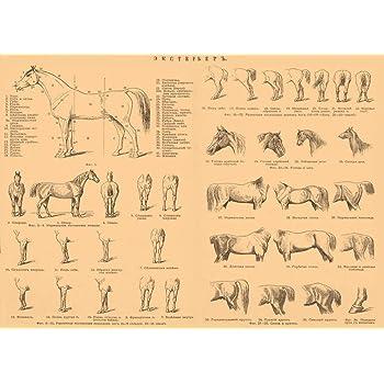 Animals Skeleton Bones Horse Anatomy Large Wall Art Print Poster