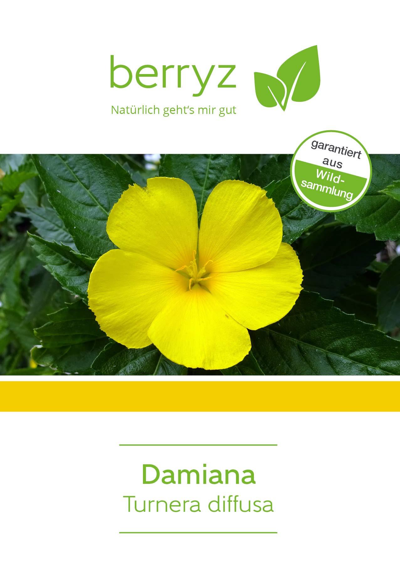 Damiana-Tee-geschnitten-Damianabltter-aus-Wildsammlung-100-g-Tee-lose-ideal-auch-als-Rucherwerk