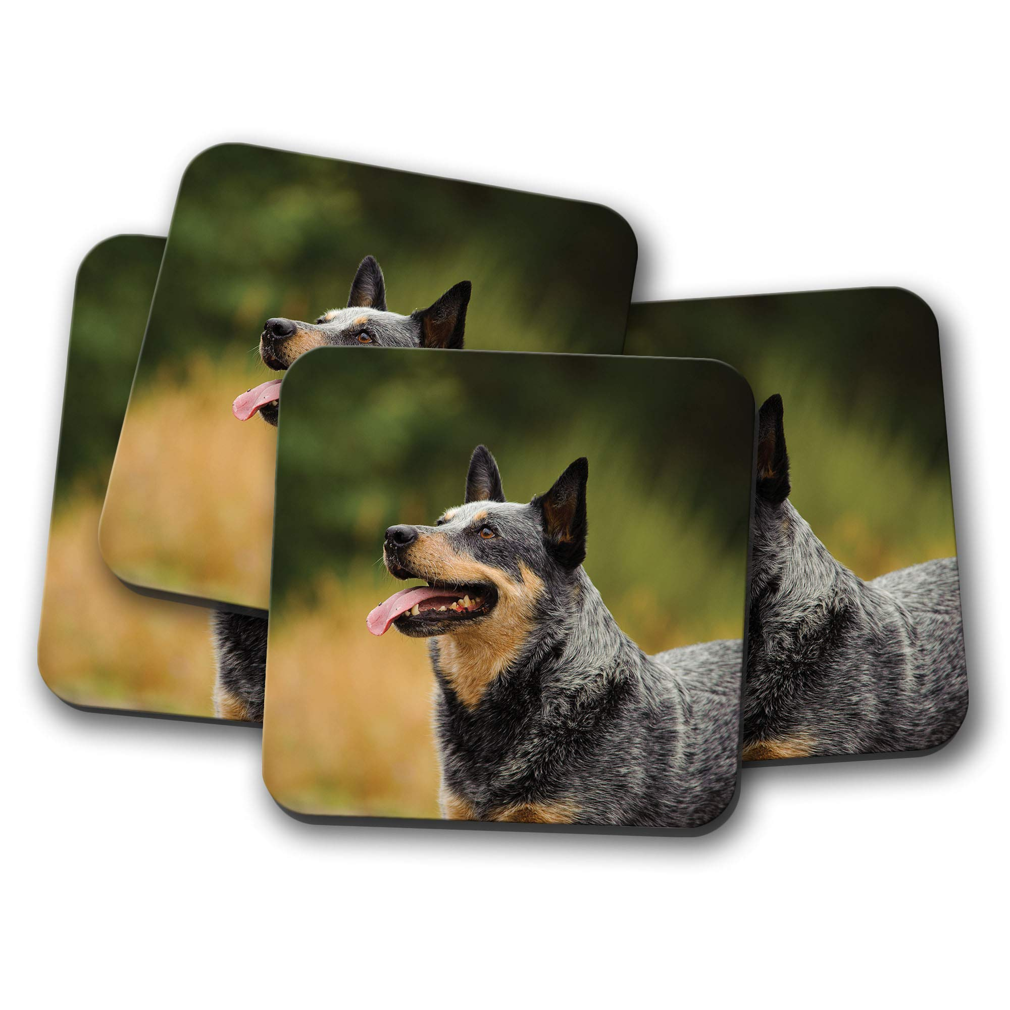 4 Set – Australian Cattle Dog Coaster – Dogs Puppy Puppies Cute Farm Gift #12478