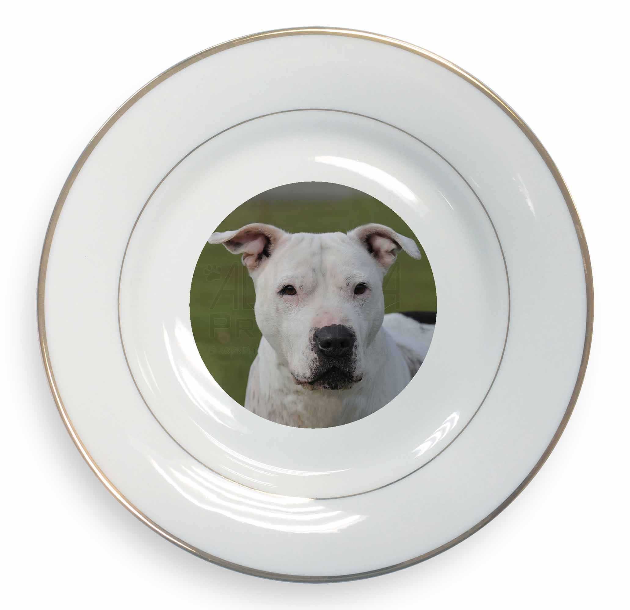 American Staffordshire Bull Terrier Dog Decorative Ceramic Plate with Gold Leaf, Ref:AD-SBT5PL