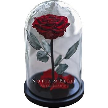 Rote stabilisierte Rose in der Glasglocke