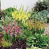 Division des bulbes rhizomes et autres tubercules for Entretien plantes jardin