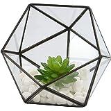 Half Ball Glass Terrario | Planta de la casa | Planta de maceta | Mini invernadero | Kit de terrario | Mesa de centro de plan
