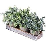 مجموعة من 3 قطع صغيرة من نباتات الأوكالبتوس الصناعية النباتات إكليل الجبل مع صندوق مزارع خشبي للاستخدام في الأماكن المغلقة وا