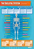 The Skeletal System | PE Posters | Laminated Gloss Paper measuring 850mm x 594mm (A1) | Physical Education Charts for the Classroom | Education Charts by Daydream Education