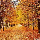 Fotohintergrund, 1,8 x 2,4 m, Vinyl, Herbstfall, Ahorn, gelber Baum