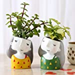 Ferns N Petals Set of 2 Indoor Plants In Green Raisin Pots for Birthday gift/Anniversary gift/Valentine's day gift...