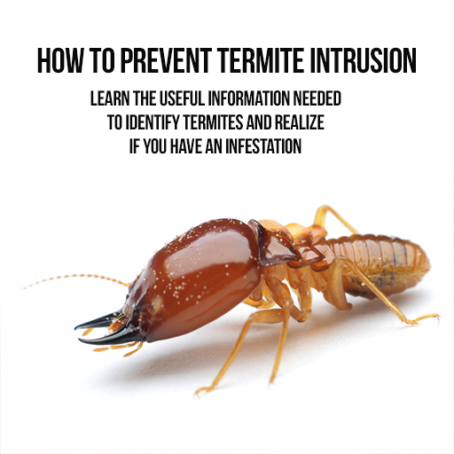 how-to-prevent-termite-intrusion-discover-how-to-transform-your-home-to-become-a-termites-free-home-