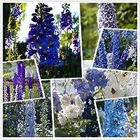 Consolida ajacis Larkspur Flower Seeds 500+ Semi organici facili da coltivare per Bonsai Home Garden Outdoor